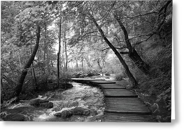 Plitvice In Black And White Greeting Card