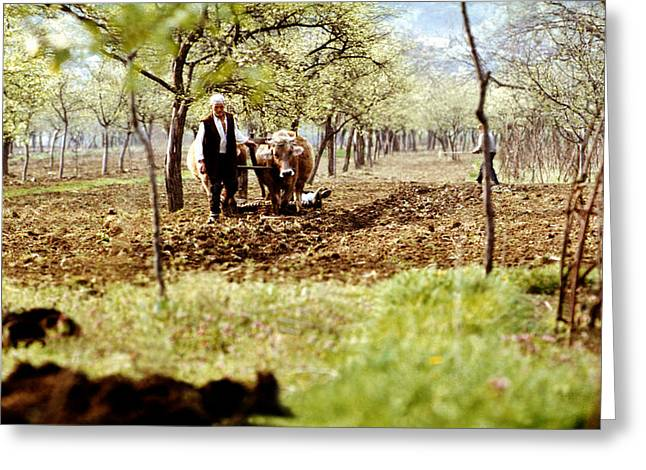 Ploughing In The Orchard Greeting Card by Emanuel Tanjala