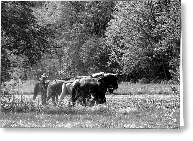 Plowing The Old Way 1  Greeting Card by George Jones