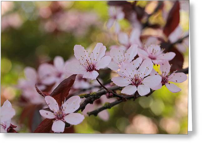 Plum Blossom Bokeh Party Greeting Card by Connie Handscomb