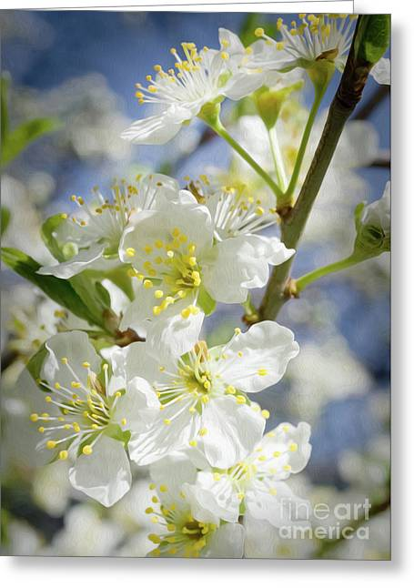 Plum Blossoms 6 Greeting Card