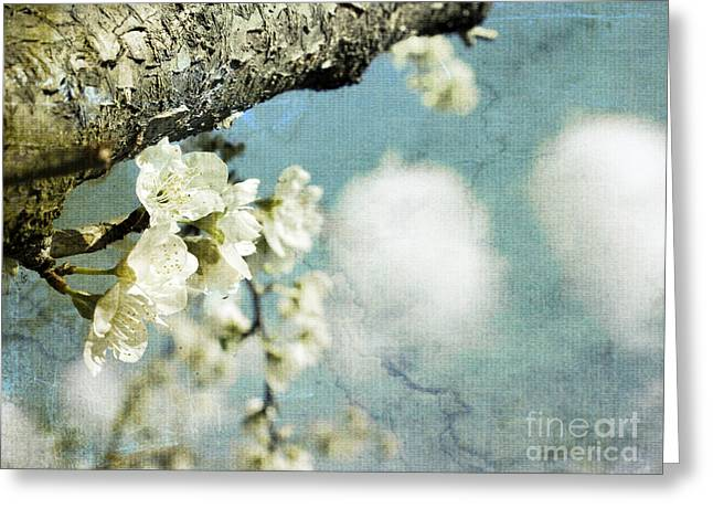 Plum Blossoms And Puffy Clouds Greeting Card