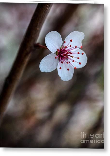 Plum Flower Greeting Card