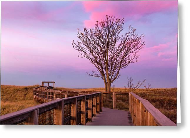 Plum Island Boardwalk With Tree Greeting Card