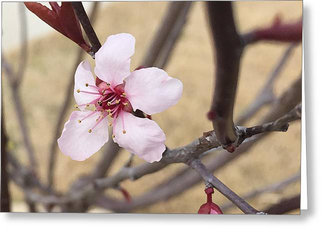 Plum Greeting Card by Julio Lopez