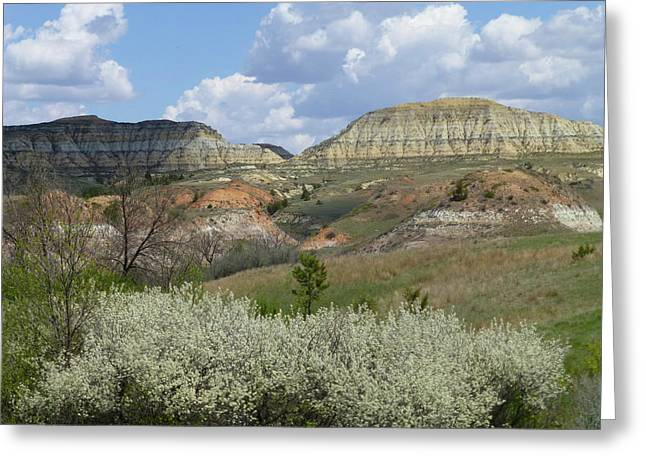 Greeting Card featuring the photograph Plum Thicket Near The Burning Coal Vein by Cris Fulton