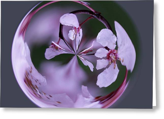 Greeting Card featuring the photograph Plum Tree Orb by Bill Barber