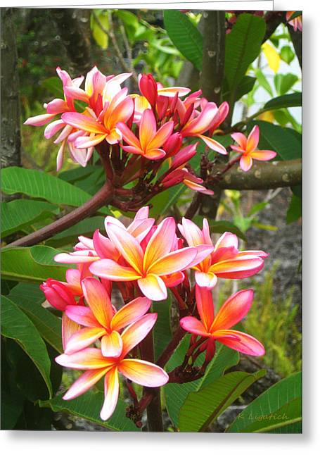 Plumeria - Pink And Orange Greeting Card