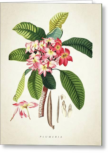 Plumeria Botanical Print Greeting Card