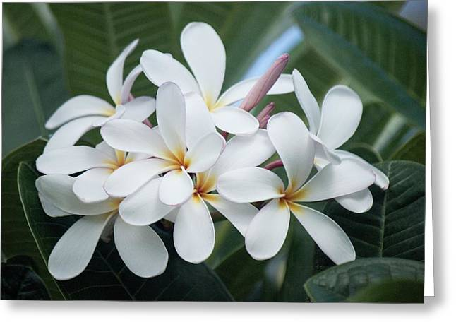 Plumeria Bouquet Greeting Card by Bonita Hensley