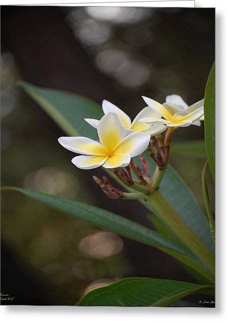Plumeria II Greeting Card by Robert Meanor