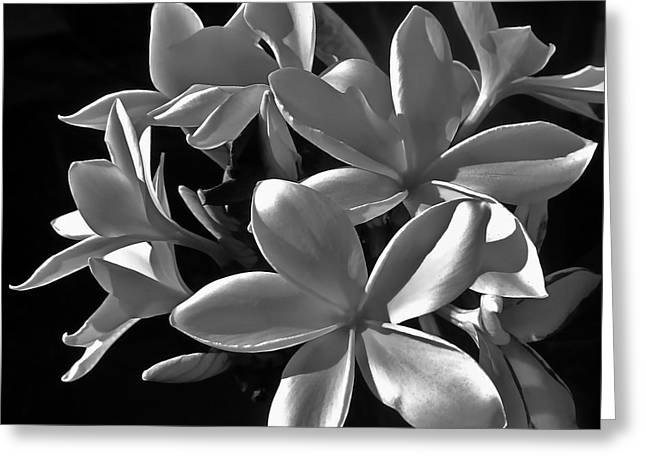 Plumeria Proper Evening Greeting Card by Gwyn Newcombe
