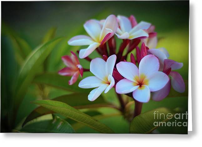 Greeting Card featuring the photograph Plumeria Sunset by Kelly Wade