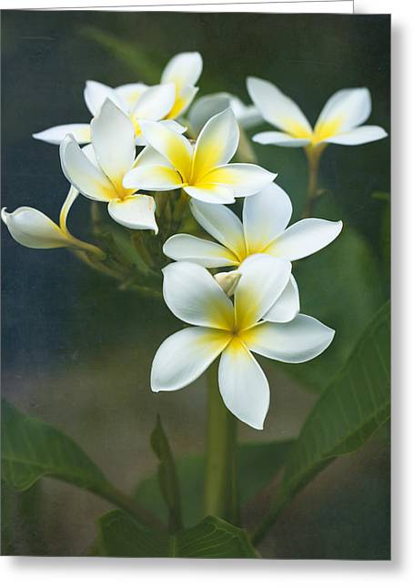 Plumerias On A Cloudy Day Greeting Card
