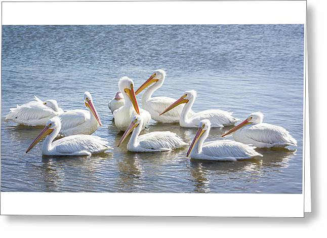 Pod Of Pelicans I Greeting Card