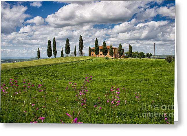 Blue Grapes Greeting Cards - Podere Greeting Card by Maurizio Martini
