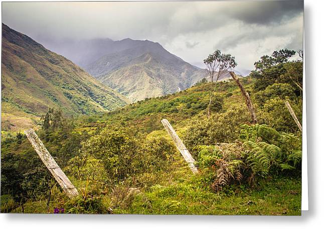Podocarpus National Park Greeting Card