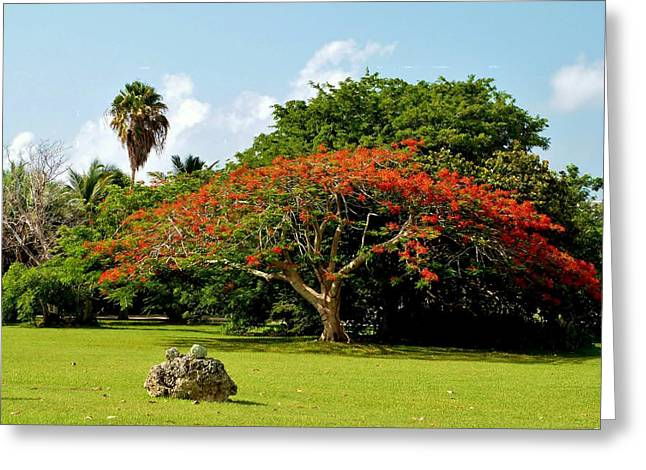 Poinciana Greeting Card by Amar Sheow