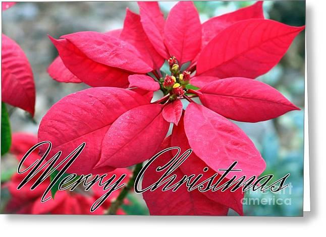 Poinsettia Merry Christmas Greeting Card