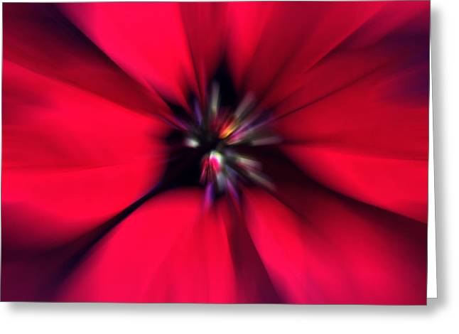 Poinsettia Zoom Greeting Card by Steve Ohlsen