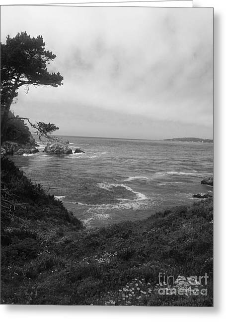 Point Lobos  2 Greeting Card by Chris Berry