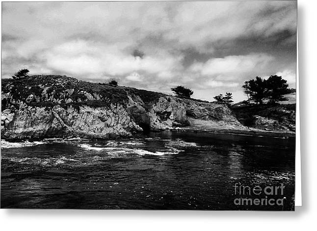 Point Lobos 4 Greeting Card by Chris Berry