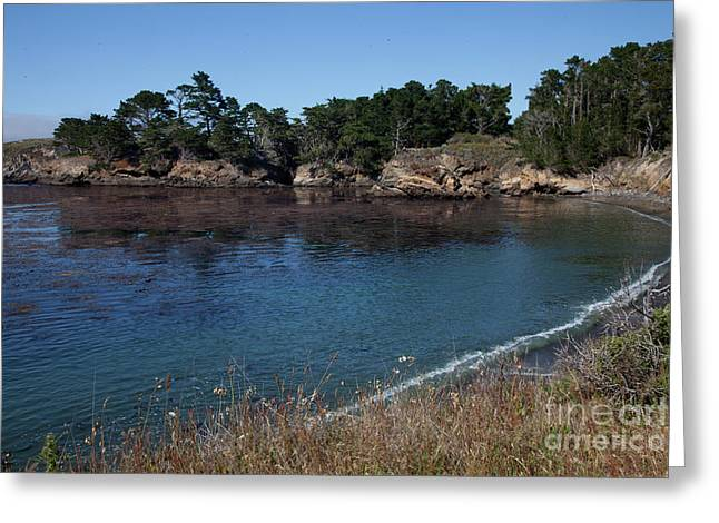 Point Lobos Greeting Cards - Point Lobos Bay Greeting Card by Nicole Riley