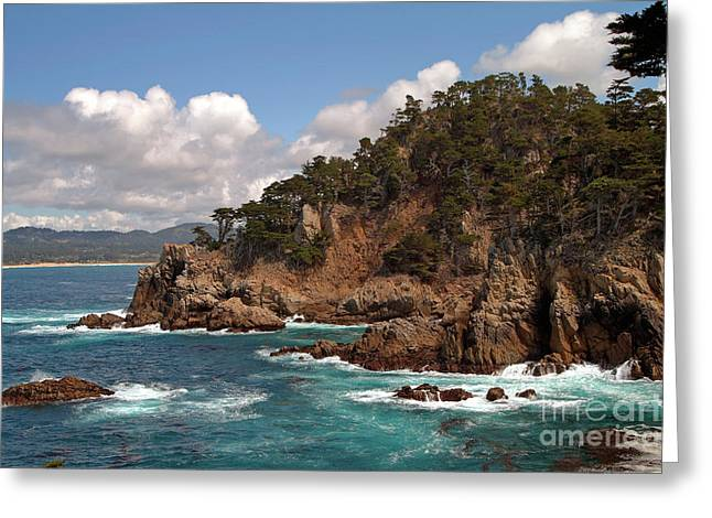 Point Lobos Greeting Card by Charlene Mitchell