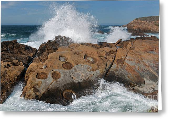 Point Lobos' Concretions Greeting Card