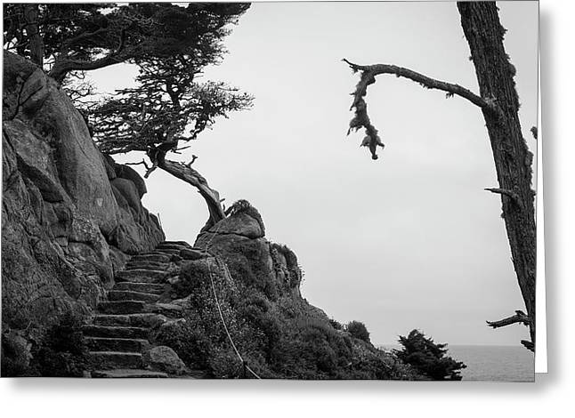 Point Lobos Pano I Bw Greeting Card