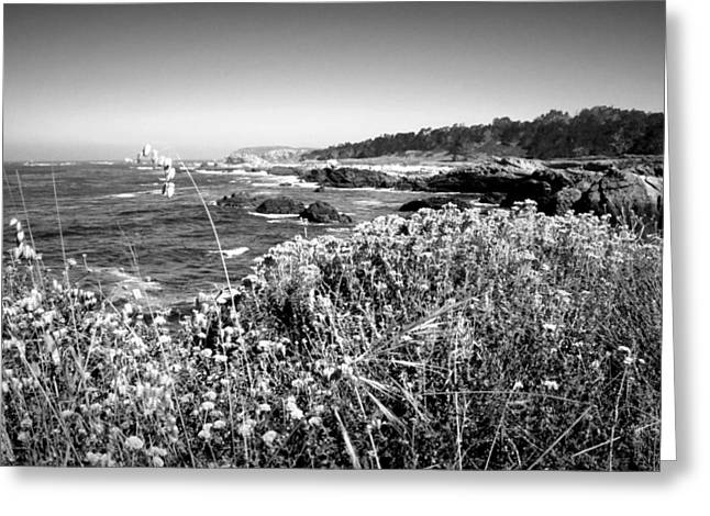 Point Lobos Shore In Bloom B And W Greeting Card