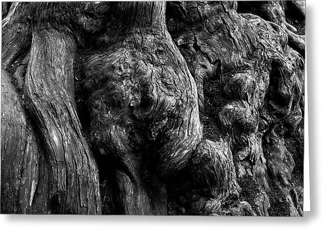 Point Lobos V Bw Greeting Card by David Gordon