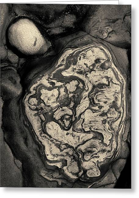 Point Lobos Vii Toned Greeting Card by David Gordon