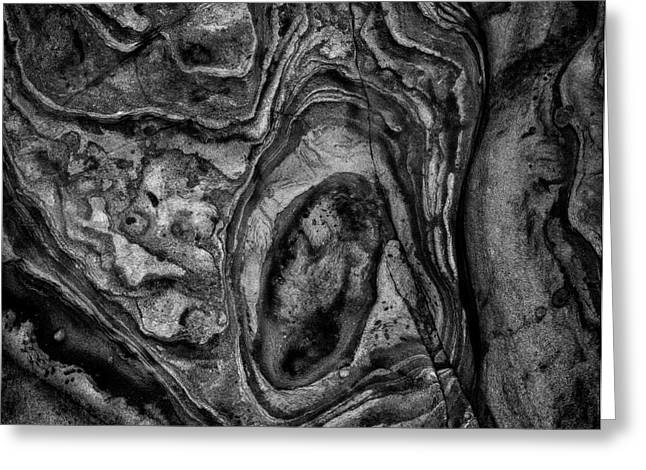 Point Lobos Viii Sq Bw Greeting Card by David Gordon