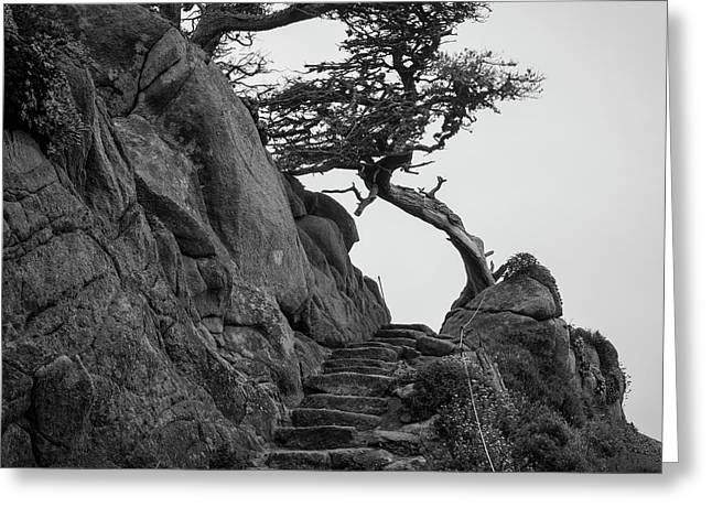 Point Lobos X Bw Sq Greeting Card