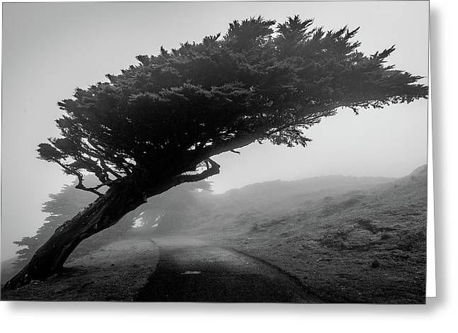 Point Reyes Fog Black And White Greeting Card