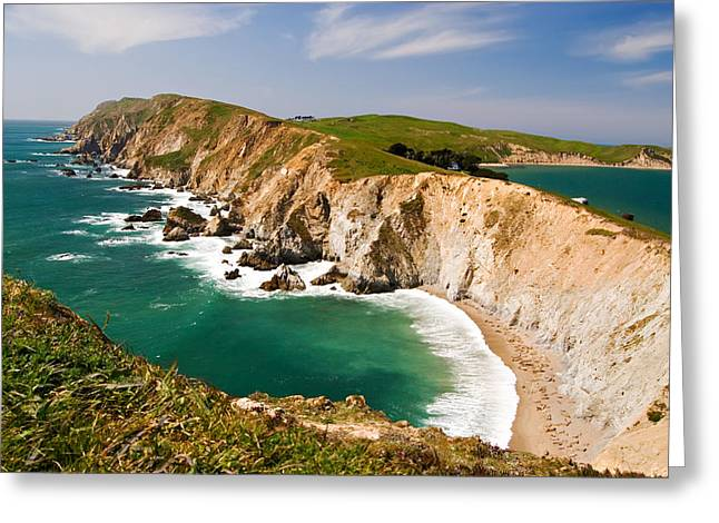 Best Sellers -  - Elephant Seals Greeting Cards - Point Reyes National Seashore Greeting Card by Renee Hong