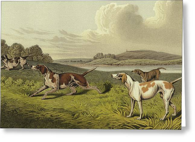 Pointers Greeting Card by Henry Thomas Alken