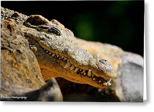 Greeting Card featuring the photograph Pointy Teeth by Barbara Bowen