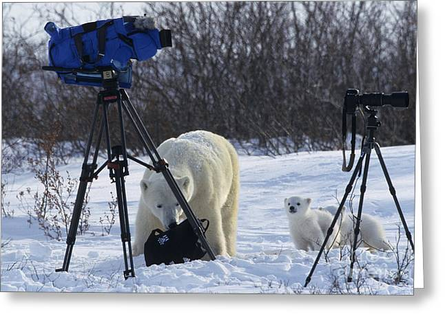 Polar Bear And Cubs With Cameras Greeting Card