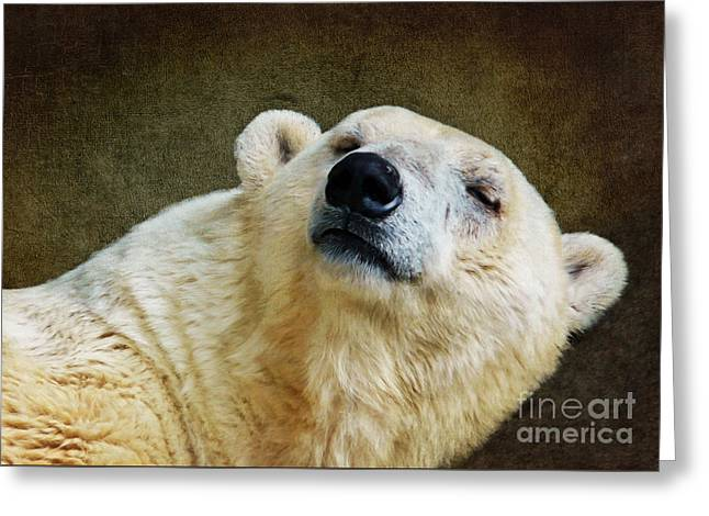Polar Bear Greeting Card by Angela Doelling AD DESIGN Photo and PhotoArt