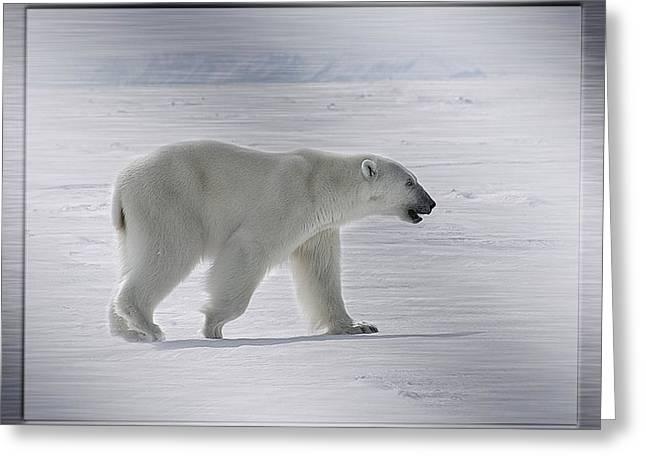 Polar Bear On Steel Greeting Card