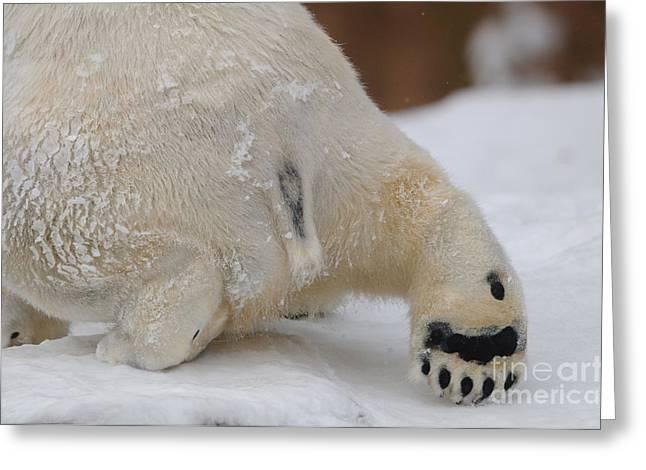 Polar Bear Paw Greeting Card by David & Micha Sheldon