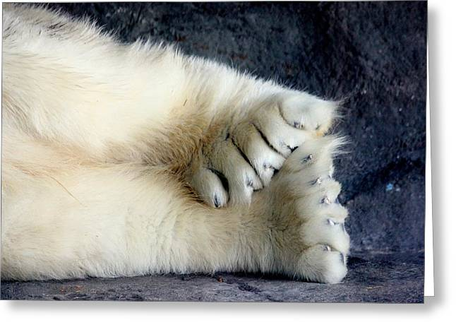Polar Bear Paws Greeting Card