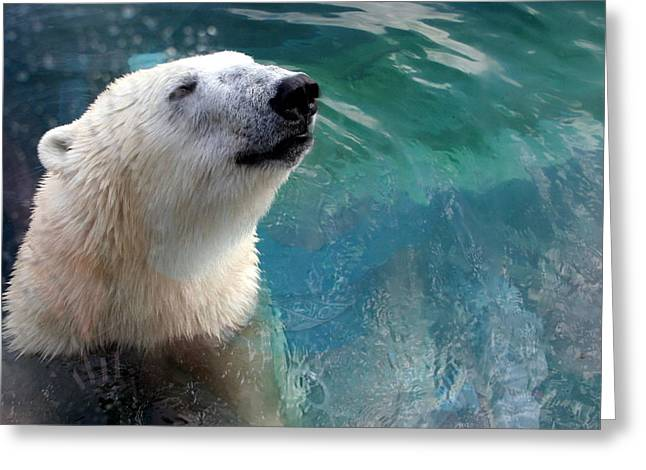 Polar Bear Up Close Greeting Card