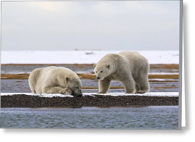 Polar Bear Zzzzzzz's Greeting Card