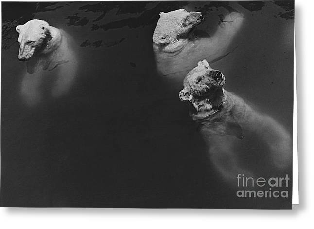 Polar Bears Swimming Greeting Card by Ylla