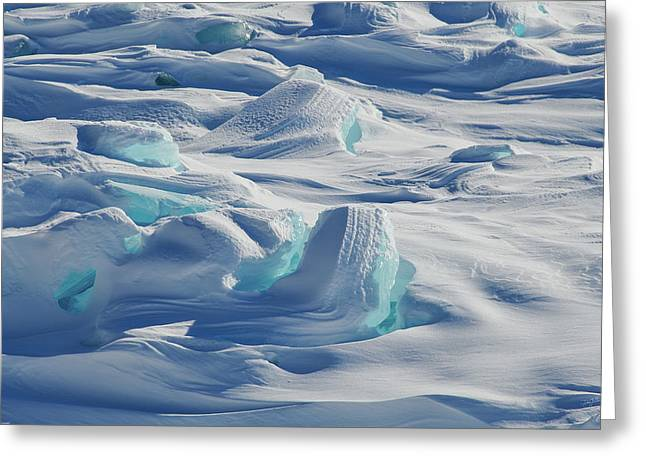 Greeting Card featuring the photograph Polar Bliss II by Doug Gibbons