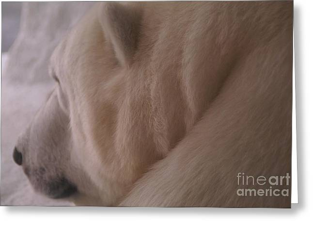 Polar Dream Greeting Card