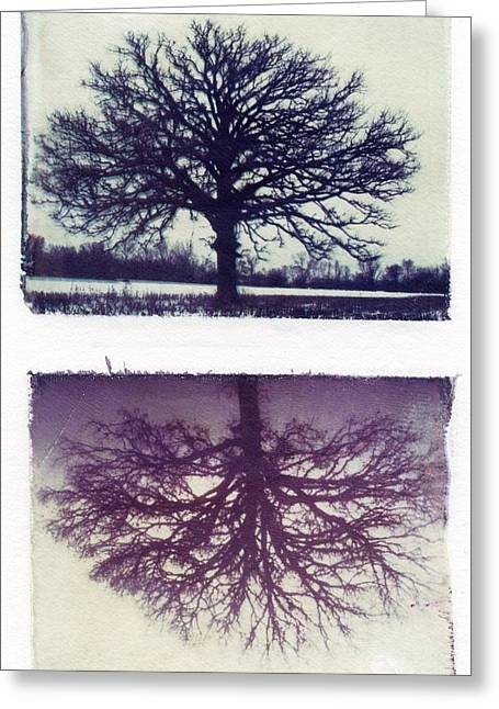 Polaroid Transfer Tree Greeting Card
